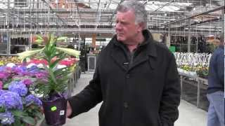 Carmen from Vince's Market Visits Bradford Green House