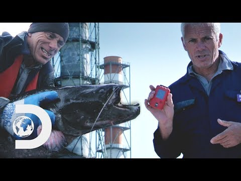 Jeremy Catches A Chernobyl Catfish That Has 16X More Radiation Than The Usual Level | River Monsters