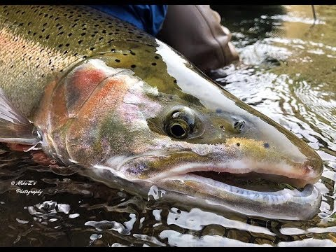 Mike Z's Guide Service | Winter Steelhead Fishing On Washington's Olympic Peninsula