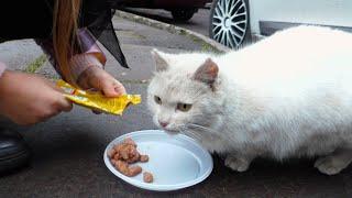 БЕЗДОМНАЯ КОШКА  просит Кушать! Домик для КОШКИ Яна КОРМИТ Животных