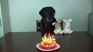 2015年2月14日はラムの13歳の誕生日 今年はムックがお祝いしてくれない...