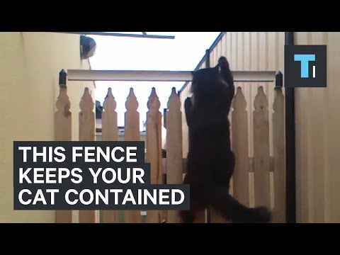 This fence will keep your cat contained