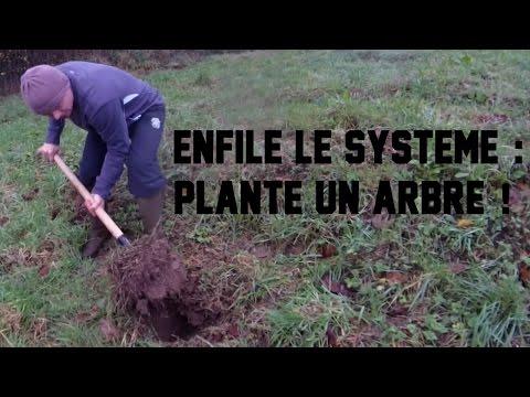 Enfile le système : Plante des arbres ! -Culture Barbabre #3- L'esprit Viking