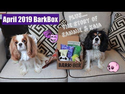 BarkBox Unboxing April 2019 | Cavalier King Charles Spaniel |Plus the Story Sammie & Kaia