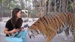 SINGING TO ANIMALS
