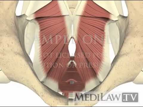 Lumbar Spine Pelvis Muscles Pelvic Floor physical therapy 3D animations