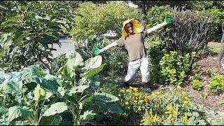 Boulevard Gardening
