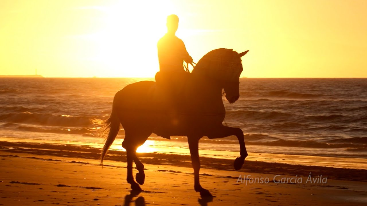 horse riding hd pics