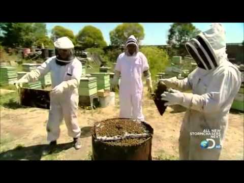 Mythbusters Bees Lift Laptop Hq Part 2 Of 2 Youtube