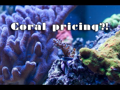 Let's talk about coral prices...