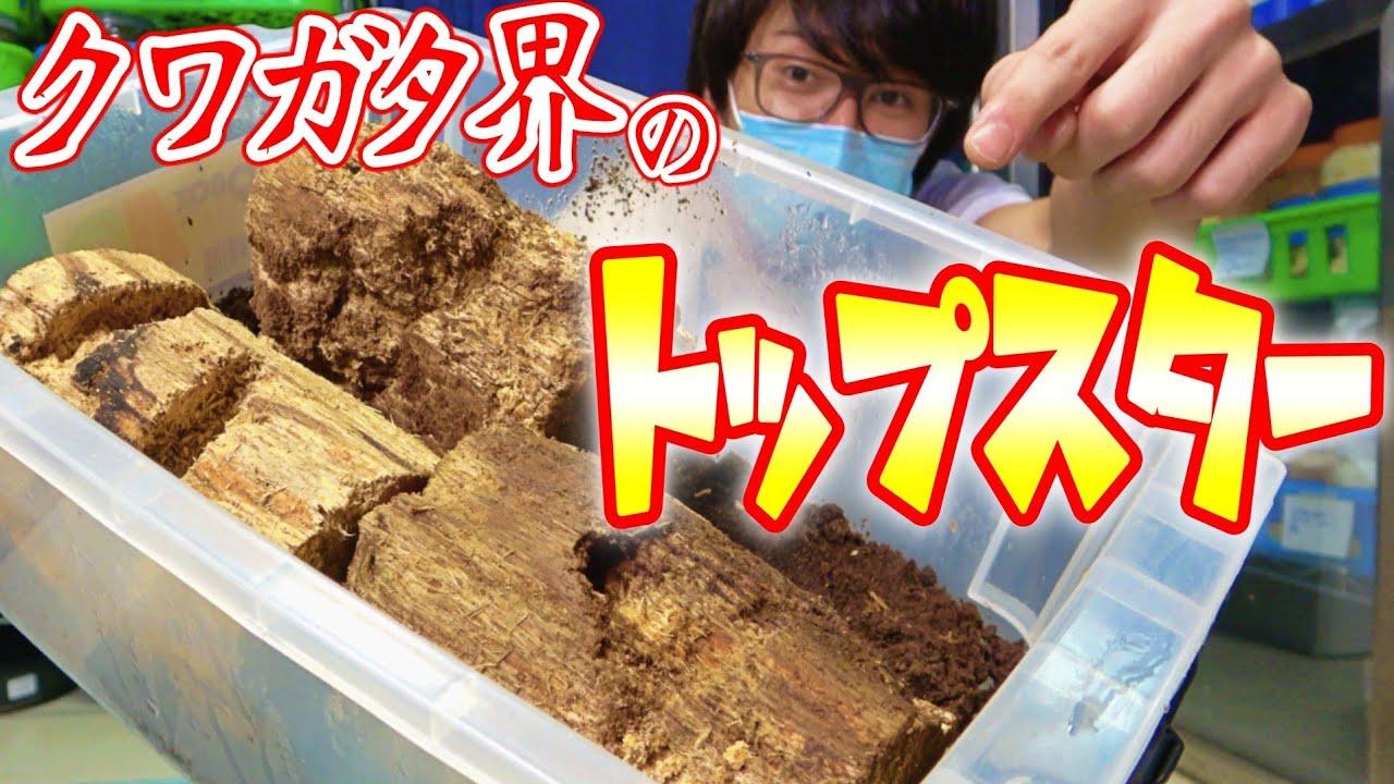 絶対的人気を誇る日本の宝が眠る木を掘り出した結果…