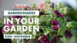 Gardening in November | NSW | Bunnings Garden Diary