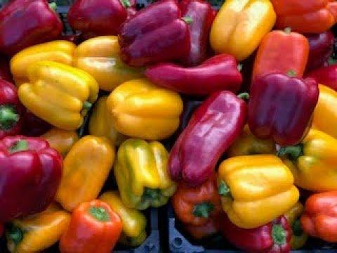 САМЫЕ УДАЧНЫЕ СОРТА СЛАДКОГО ПЕРЦА! | выращивание | урожайные | сладкий | посеять | сортов | семена | огород | лучшие | купить | сорта