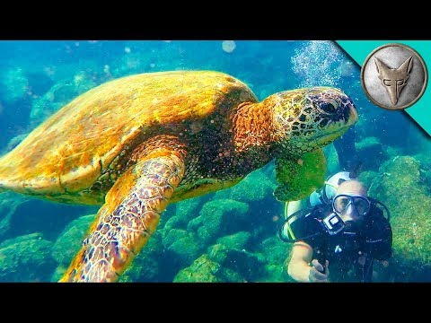 Thumbnail: Diving with Sea Turtles!