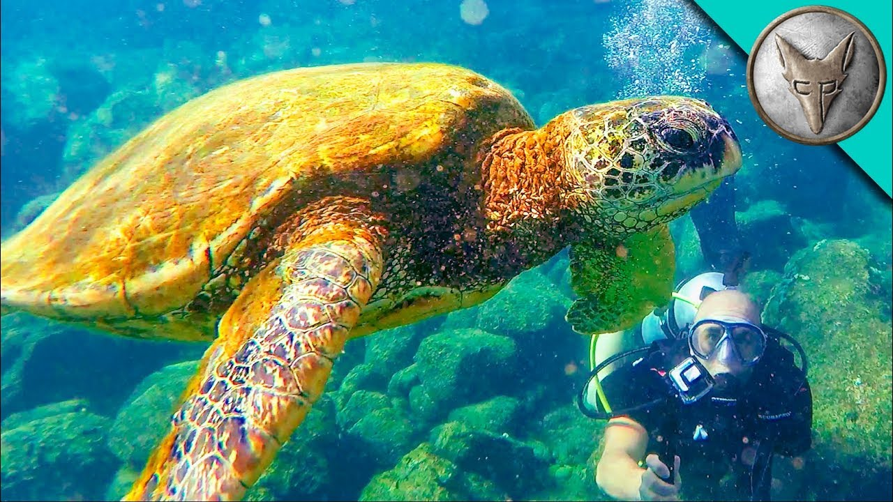diving with sea turtles youtube