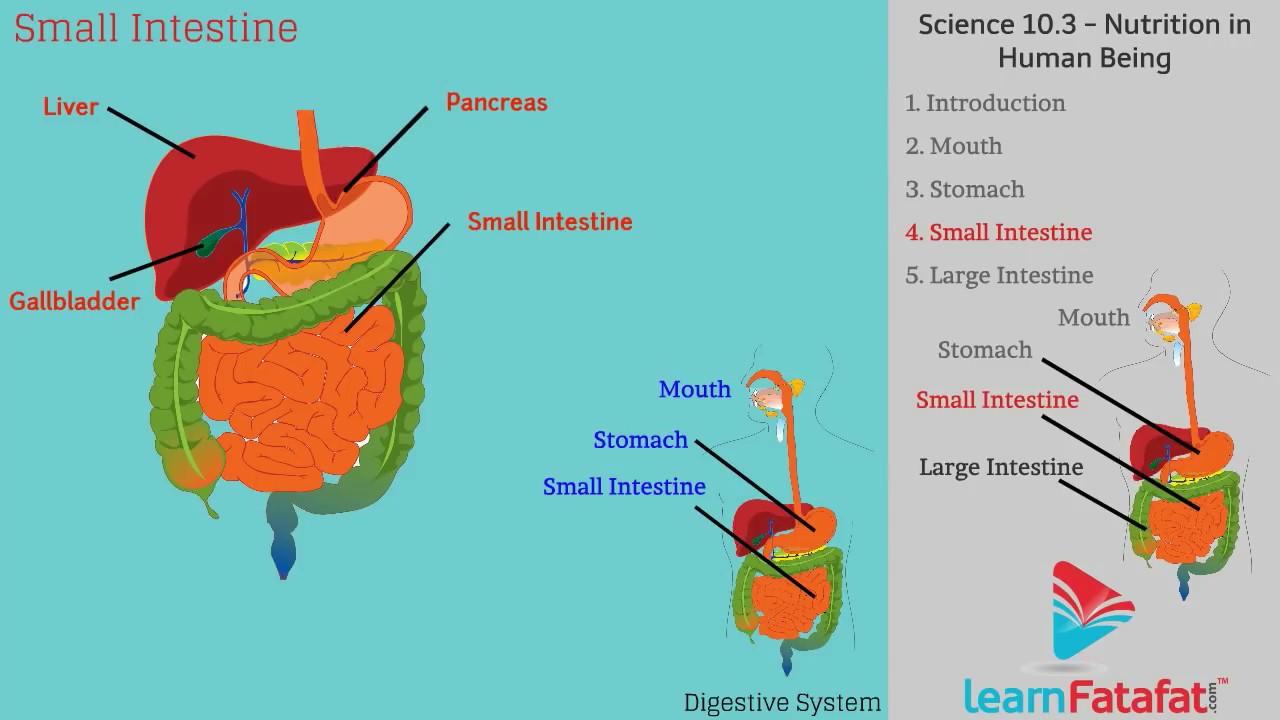 Science 21 Mouth Diagram Grade 4 Online Schematic Diagram
