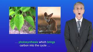 GCSE Science Biology (9-1) The Carbon Cycle