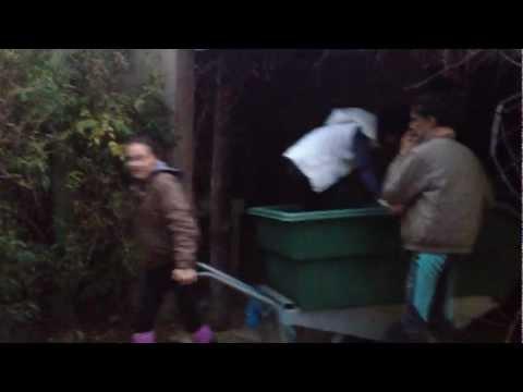 distribution du foin, par sydney filmer by me