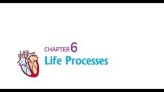 Bonus video - 4 | 10th CBSE | Transportation | Core Academy Bilaspur