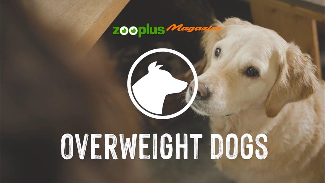 Cum ajutam cainele sa castige in greutate - ultragame.ro