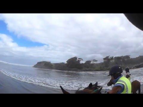 Horse riding trek at Muriwai Beach, Auckland, NZ  January 10, 2016