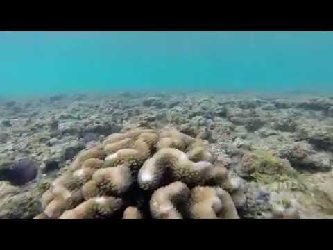 waikiki-hawaii-reef-gopro-raw-footage:-filmed-off-hilton-hawaiian-village