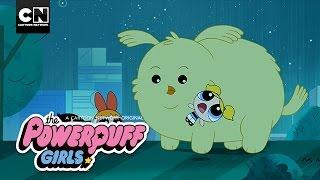 Powerpuff Girls | Cheepy Returns Home | Cartoon Network