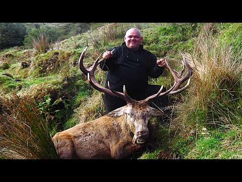 #waikarimoana Hunting Fallow Deer With Bow In The Roar In New Zealand # 203