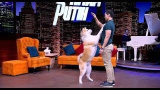 Video Anjing Akita Yang Setia | HITAM PUTIH (15/10/18) Part 1 download MP3, 3GP, MP4, WEBM, AVI, FLV Oktober 2018
