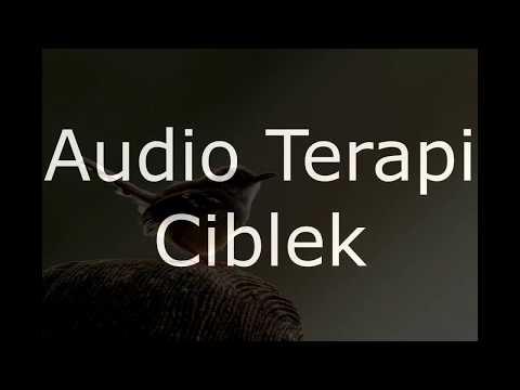 Suara Terapi Ciblek Macet Bunyi Agar Gacor Dan Ngebren