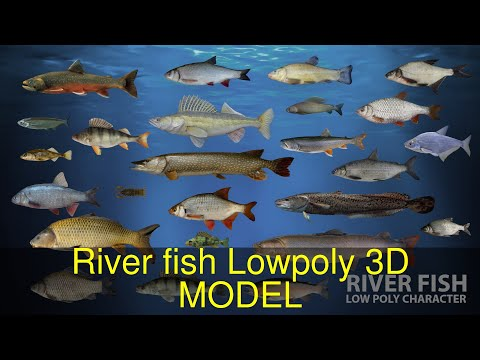 3d-model-of-river-fish-lowpoly-review