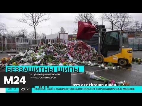 Огромные запасы цветов уничтожили в Нидерландах из-за коронавируса - Москва 24