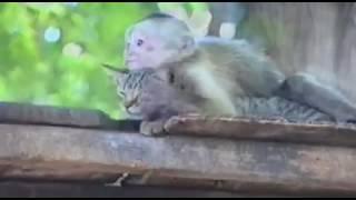 Кайфует кошка и обезьяна