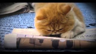Мистическая история о семи животных(Как кот попал в ловушку мира новостей? Почему собака выдает себя за безумного диджея? Почему кошки выглядят..., 2015-09-03T14:30:55.000Z)