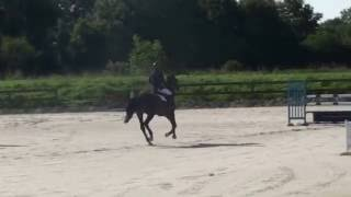 Aspromachos Delsol & Guillaume Batillat - Prépa 1.20m  Liverdy en Brie - Août 2016