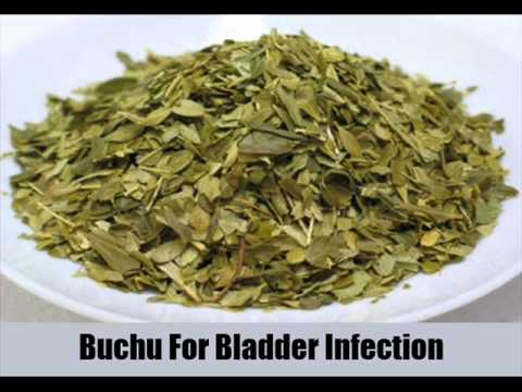 8 Best Herbal Remedies For Bladder Infection