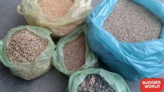 BUDGIES SEED MIX FOR BETTER BREEDING PART 2 IN URDU