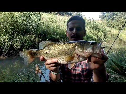 Where To Catch Bass In Pearland