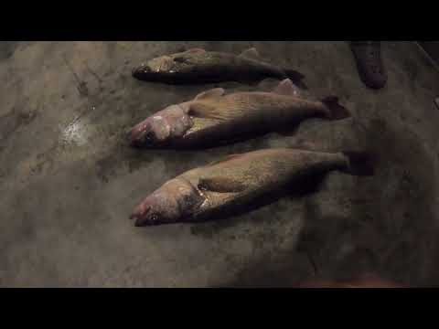 Walleye Fishing - Patoka Lake Indiana