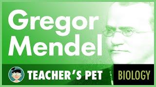 Video Gregor Mendel download MP3, 3GP, MP4, WEBM, AVI, FLV Desember 2017