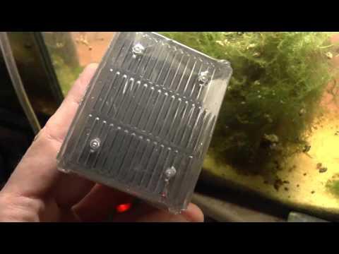 [DIY] Aspidoras Spilotus - Astuce pondoir avec filtre Biobox