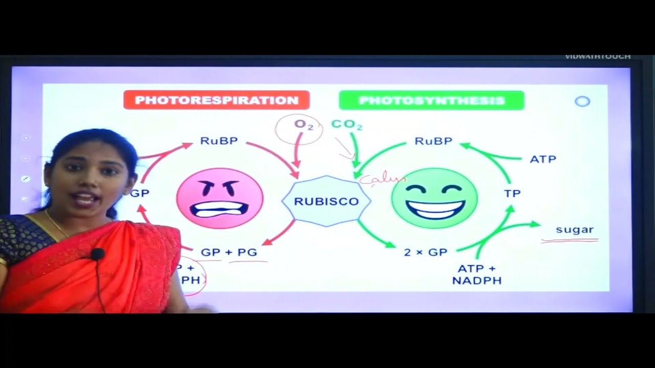 I PUC | Biology | Photosynthesis in Higher Plants - 05