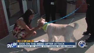 Dog Survives Vicious Attack; Search For Owners