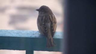 Голуби свили гнездо на балконе примета :: newvideoblog.