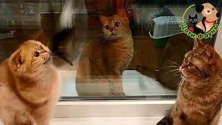 Кошка лысеет во время течки, какие могут быть причины?