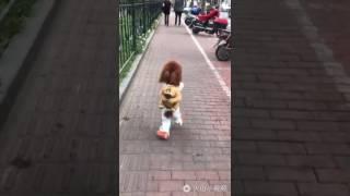 Собака идёт в школу!!