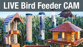 LIVE 4K Bird Feeder Cam - Recke, Germany (Bird watching)