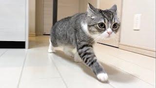 給湯器の声が変わってパニックになっちゃった猫がこちらです…