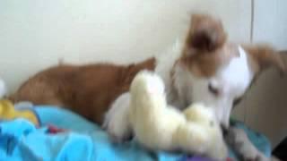 Kerė ir meškiukas :)