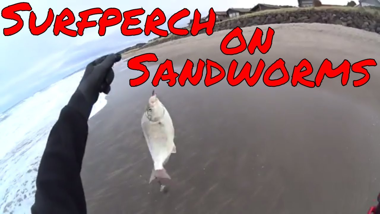 Oregon coast fishing surfperch on sandworms youtube for Oregon out of state fishing license
